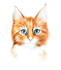 Watercolor drawing of a red kitten