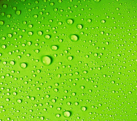 the water drop on fresh light green  background
