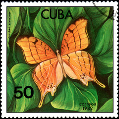 CUBA - CIRCA 1982: Postage stamp printed by Cuba shows butterfly Marpesia eleuchea, series Butterflies