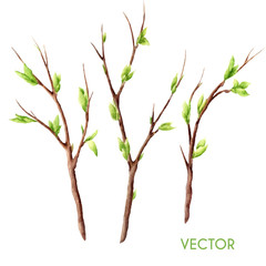 Hand drawn vector watercolor spring tree branches set isolated on white. Twigs with buds and leaves.