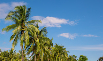 Palm trees and sky tropical landscape. Sunny day on exotic island in Asia.