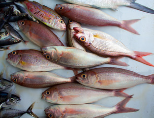 Red oceanic fishes on the market. Exotic sea fishes bunch close photo.