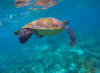 Sea life image of sea turtle for banner template