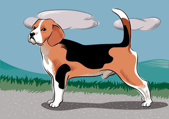 Beagle dog breed, in a landscape