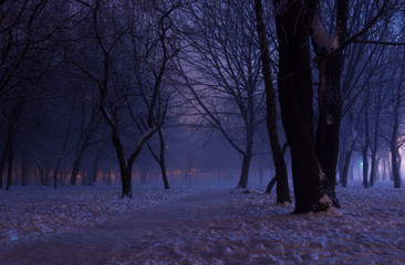 Foggy winter night in the park. Majestic silhouettes of trees covered in purple mist and orange lights. A downtrodden path leads through the snow to the mysterious and picturesque park