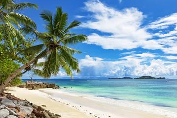 Coconut palm tree over blue ocean beach