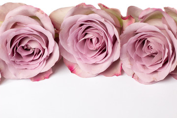 Drei pinkfarbene Rosen