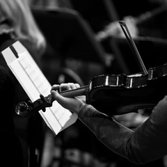Hands musician playing the violin in the orchestra in black and white