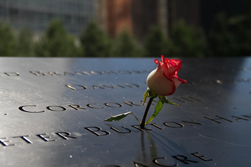 rose in the dark shade and blurred background at the 911 memorial world trade center, New York