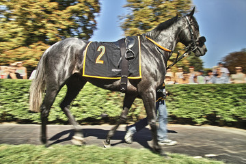 Black Race Horse 01