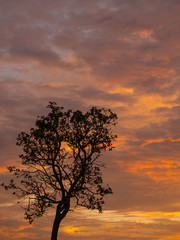 Golden Mixed Grey Clouds and Tree silhouette