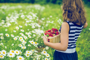 Girl collecting strawberries in daisy field