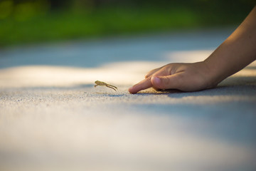Small frog escaping childs hand