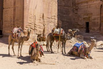 Jordan, Petra, waiting camels