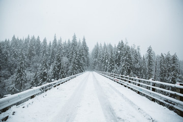 Snowy road heading into forest
