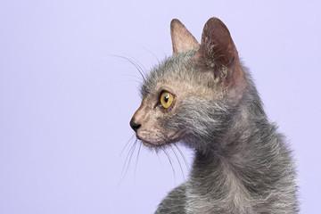 Katzen-Werwolf-13865