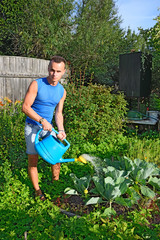 Fototapeta Young man posing and watering the cabbage in the garden on the p obraz