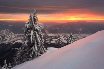 Snowy trees on background of amazing sunset in winter Carpathian