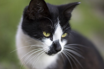 Black white cat face on green background. Clever smart black whi