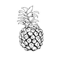 frutta ananas disegnata al tratto