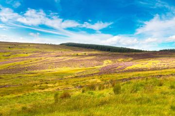 Poster Wijngaard Fields of heather in Scotland