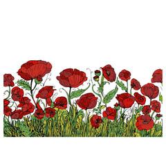 campo di papaveri fiori rossi profumati