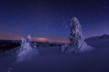 Snowy trees under the starry sky in mountains