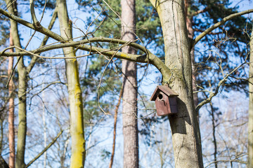 wooden starling-house hanging on a tree somewhere in a pine forest