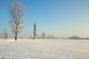 Winter Landschaft mit Baum Reihen