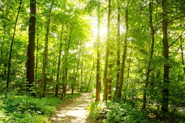 Einladung zum Entspannen und Träumen: Wald im Frühling mit Morgensonne :)