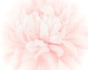 petal flower on soft pastel color