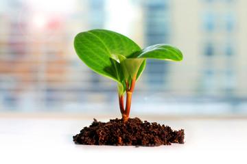 Plant. New life concept.