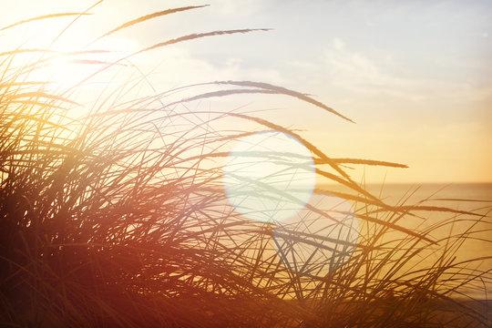 beach grasses on the seashore, shot into the sun