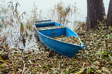 Flooded boat in reeds at the lake shore.