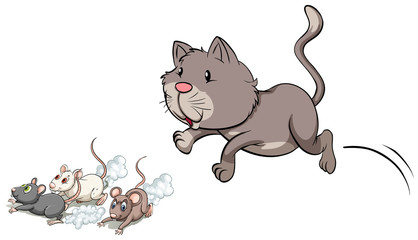 Gray kitten chasing mouse