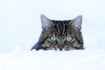 Eine Katze schaut neugierig aus dem Schnee