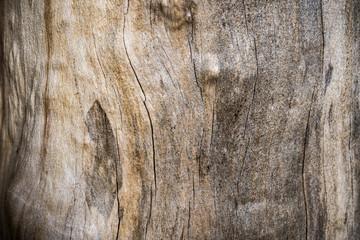 El resumen envejeció la madera textura en  el fondo con grietas