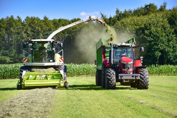 Fototapete - Grassilage - Häcksler und Traktor mit Anhänger im Einsatz auf dem Feld