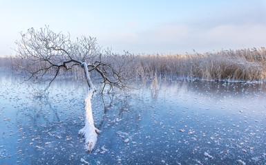 Cold winter morning sunrise lighting up frozen nature in Estonia.