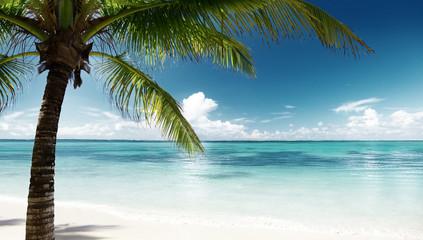 Fototapete - palm and sea