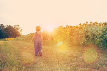 Boy walking down a path next to a sunflower field