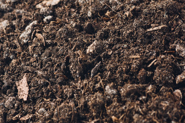 Fertile soil texture background seen from above, top view. Gardening or planting concept.