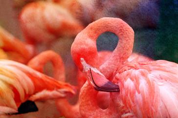 Photos bright red flamingos