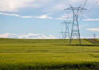 Power lines in a farm field
