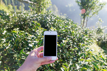 Smartphone in hand take landscape travel photo on mountain