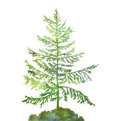 silhouette of fir tree