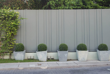 Trees planted in pots in front of a gray wall.