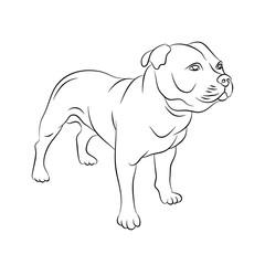 american staffordshire terrier vector illustration