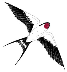 fly swallow bird in the sky realistic wings