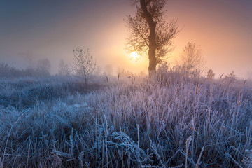 Spoed Foto op Canvas Lavendel Frosted autumn landscape at dawn. Beautiful morning hoarfrost.